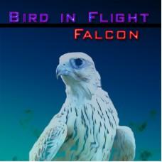 UVI Falcon Bird of Flight